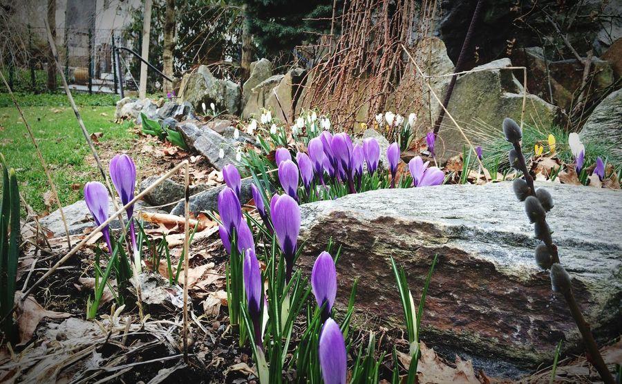 Finally Spring! Spring