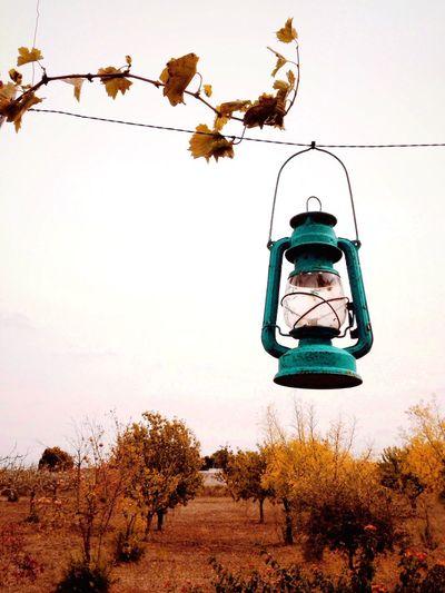 Lantern Nature