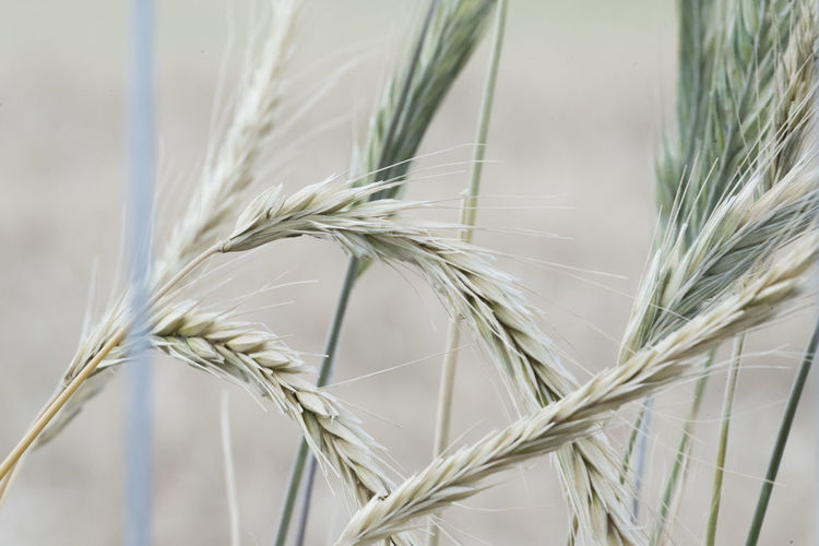 Close-up of stalks against the sky