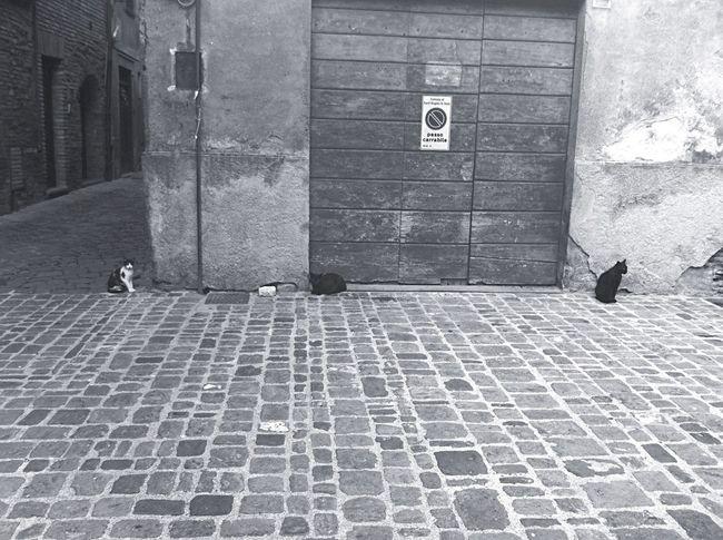 Cats Cats Trio Blackandwhite B&w Street Photography Grey