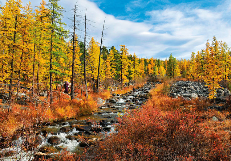 Mountain River Scene (Autumn of the Shishged, Mongolia) Khuvsgul Mongolia Autumn Autumn Collection Beauty In Nature Change Cloud - Sky Day Environment Fall Forest Growth Land Nature No People Non-urban Scene Orange Color Outdoors Plant Scenics - Nature Shishged Sky Tranquil Scene Tranquility Tree First Eyeem Photo