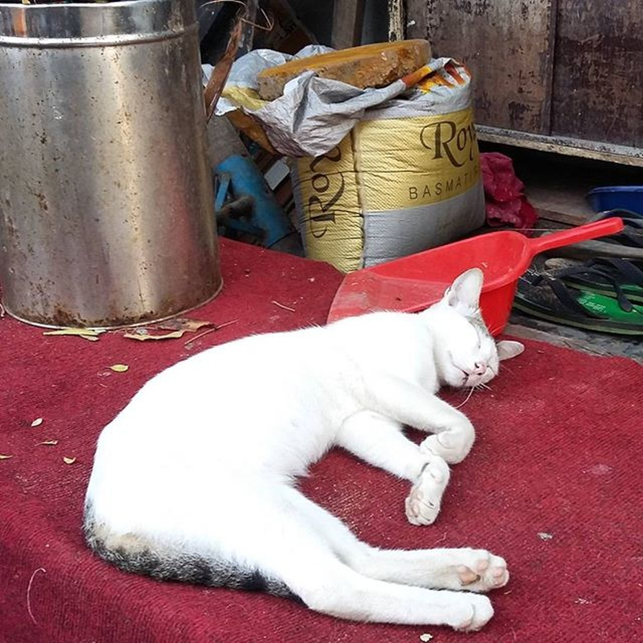 pets, domestic animals, animal themes, domestic cat, one animal, mammal, feline, day, outdoors, no people