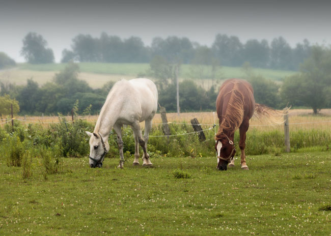 White Horse Greenery Animal Themes Animal Portrait Animal Photography Brown Horse Horse Field Horse Photography  Animals Horses EyeEmNewHere