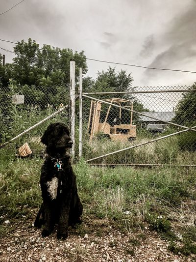 Toby the goldendoodle Storm Cloud Storm Travel Pet Abandoned Bulldozer Fence Gate Sky Cloud - Sky Nature Fence Plant Day Barrier Tree Outdoors Architecture
