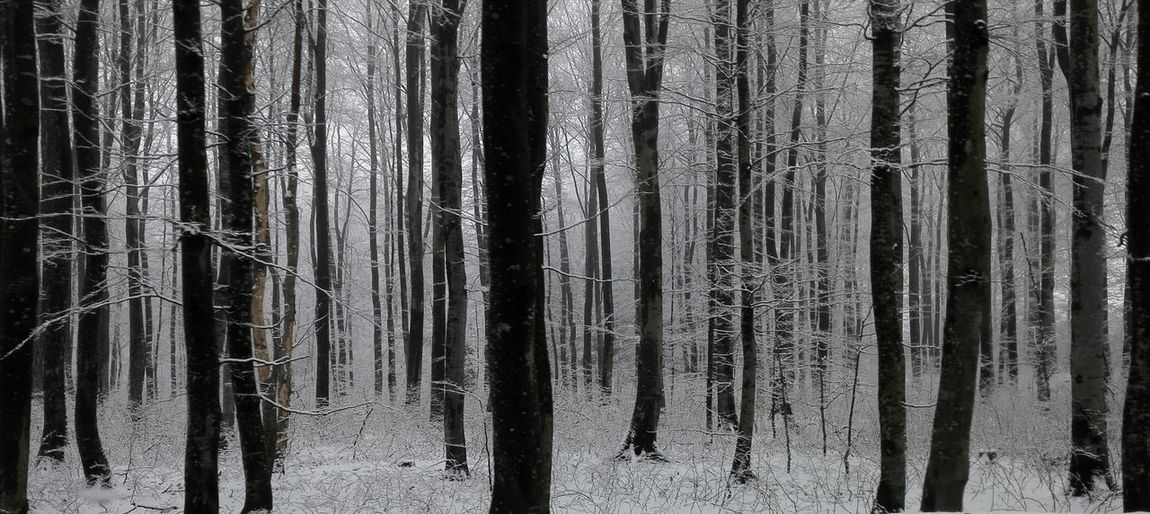 Snow Late Winter Spring? Forest Trees Calm Tranquility