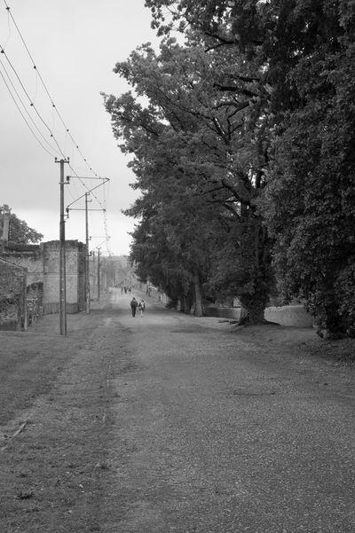 Oradour sur Glane Remember Ww2 Memorial Tree Day Electricity Pylon Sky