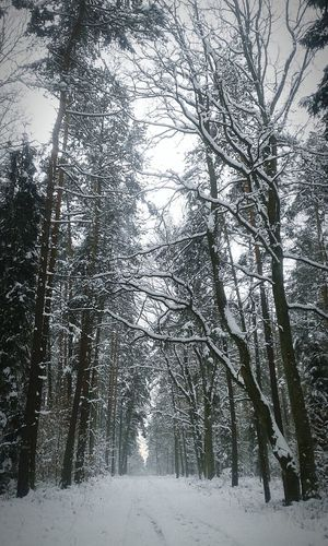 Winter Forest Bicycle Trip Snow Landscape