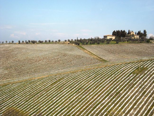 Tuscany Tuscany Countryside Tuscany Italy Built Structure Sky Architecture Building Exterior Nature Agriculture Outdoors Day Landscape No People Beauty In Nature Field Agricolture Wine Screw Vineyard Wineyard Vineyard Cultivation Winemaking Cultivated Land Cultivation Fieldscape