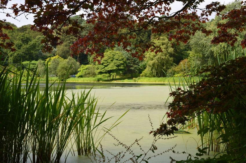 Northern Ireland Mount Stewart National Trust Mount Stewart Gardens Mount Stewart Beauty In Nature Idyllic Lush Foliage Water Lake Lakeshore Tree