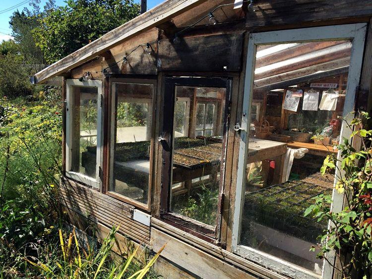 Greenhouse Garden Photography Iphone 6