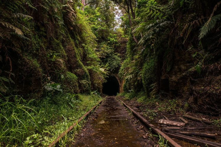 Into the unknown Lines Abandoned Railway Spooky Eerie Tunnel The Way Forward Plant Direction Tree Nature Growth Diminishing Perspective Green Color Beauty In Nature Land Outdoors Day EyeEmNewHere