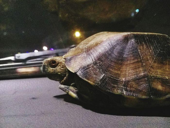 大晚上来白沙就是为了买一只乌龟,我打你头破去滴阿