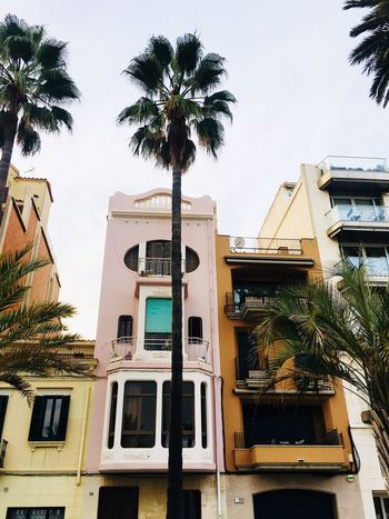 I could live there Apartment Tenement Houses Vintage House Palm Tree SPAIN Architecture Built Structure Tree Building Exterior Plant Sky Nature Residential District Window Building