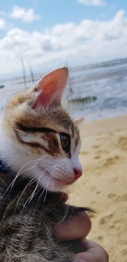chaton Water Pets Sea Beach UnderSea Child Sand Close-up Sky Domestic Cat