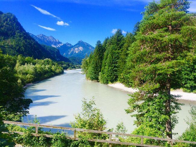 switzerland Tree River Sky Beauty In Nature