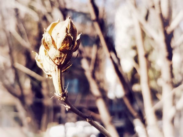 EyeEm Selects One Animal Animals In The Wild Animal Wildlife Nature Close-up Insect Focus On Foreground Day Animal Themes No People Outdoors Plant Beauty In Nature Branch Fragility Flower