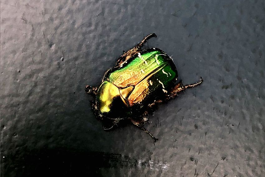 No People Animal Wildlife Animal Themes High Angle View Animals In The Wild Water Animal Outdoors Nature One Animal Insect Close-up Sunlight