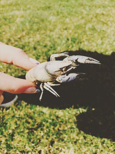 Ew. Found a crayfish 😂 PE Crayfish Wisconsin Friend Weird Animals Gross
