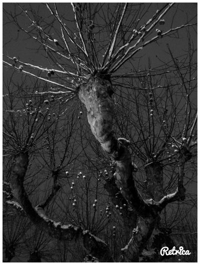 Blackandwhite Noiretblanc Eye4black&white  Streetphotography Streetphoto_bw Rue Trees Arbres Beuatiful Open Edit