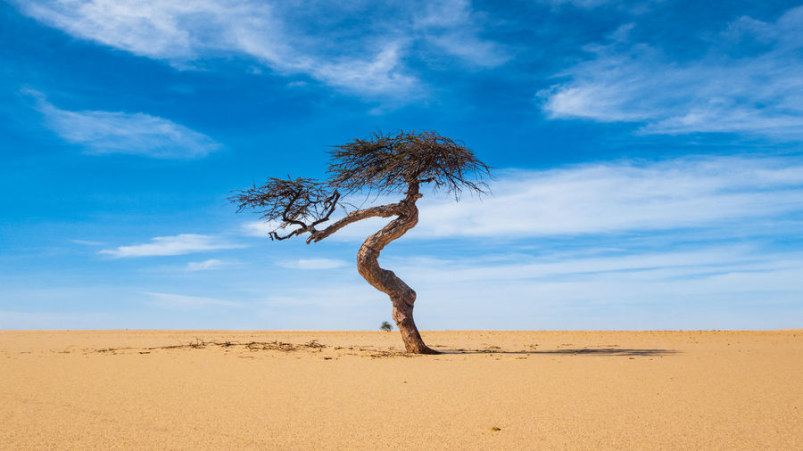 Tree on desert against sky