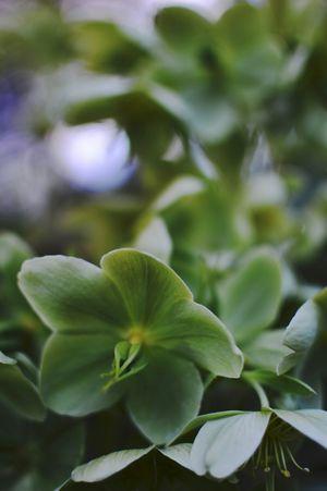 Let me be Green. Pantone Colors By GIZMON Flowerporn