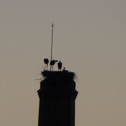 A family of storks or one with a multi-exposure effect? No People Outdoors Day Nature Bird Sky Industrial Chimney Stork Nest Nest Storks Family Storks Sunset Silhouettes