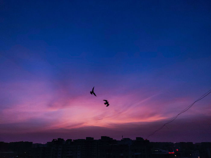Silhouette of birds flying over city