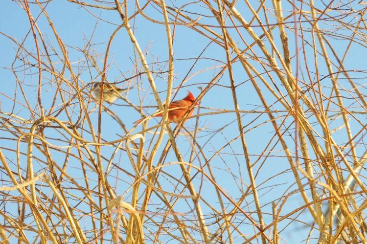 Photography On A Nice Day Outdoors In Back Yard Cardinal Bird Urban Birds Bird Photography