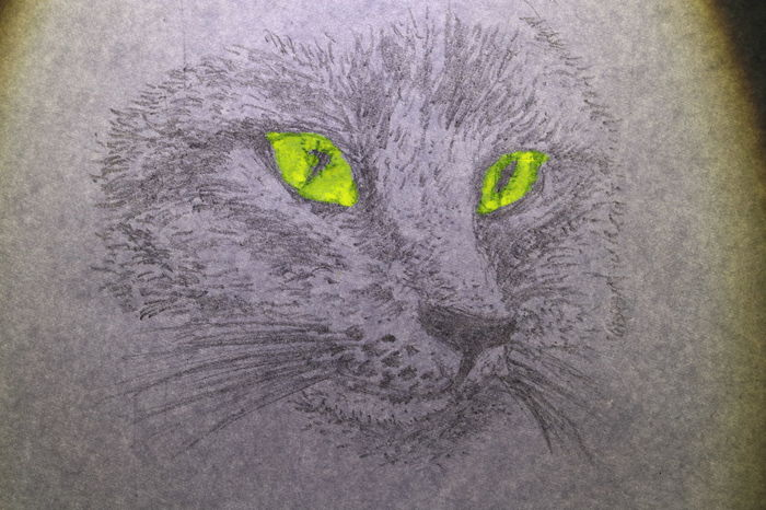 The face of cat wrote by pencil on white paper 4legs Diamond Eyes  Nature Rat Textures Animal Black And White Cat Close Up Cute Dog Drawing Fur Ideas Indoors  Lazy Animal Long Mustachet Long Tail Paper Pencil Drawing Pet Portrait Texture