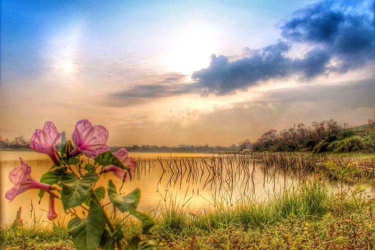 Bunga di tepi telaga Landscape Sunrise_sunsets_aroundworld Sunrise