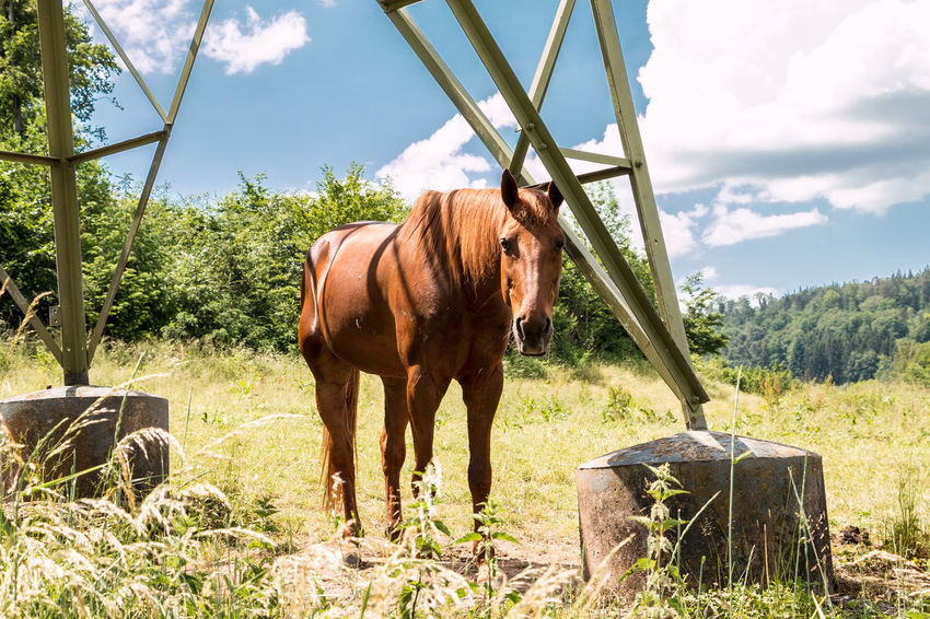 Horses on the green meadow Animal Animal Themes Animal Wildlife Day Domestic Domestic Animals Field Grass Herbivorous Land Livestock Mammal Nature No People One Animal Outdoors Pets Plant Sky Standing Sunlight Tree Vertebrate