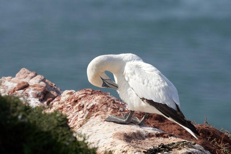 White bird perching on rock by lake