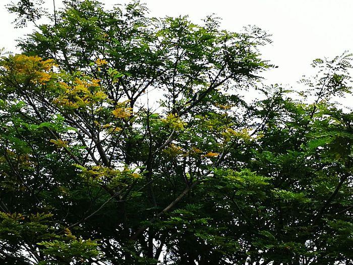 Burung Raja Udang Nature Tree Sky Growth