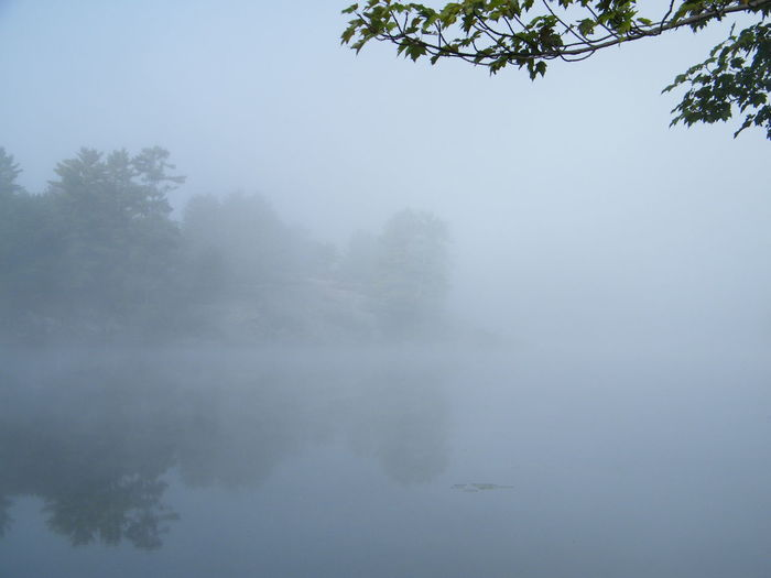Misty morning Beauty In Nature Branch Fog Foggy Lake Mist Tranquil Scene Tranquility Tree Water