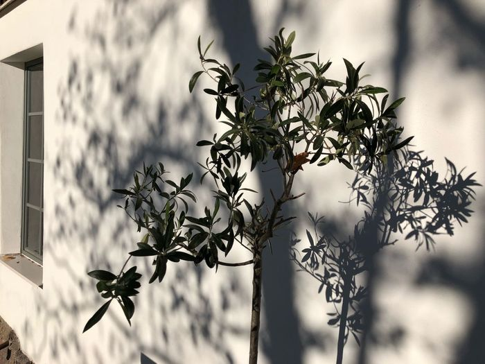 Shadow Shadows