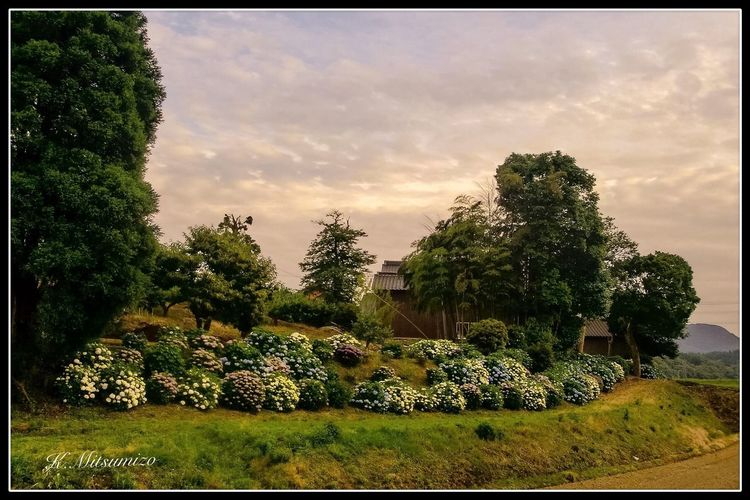 あじさい Nature Photography Tadaa Community Enjoying Life Hydrangea 紫陽花 唐津 相知