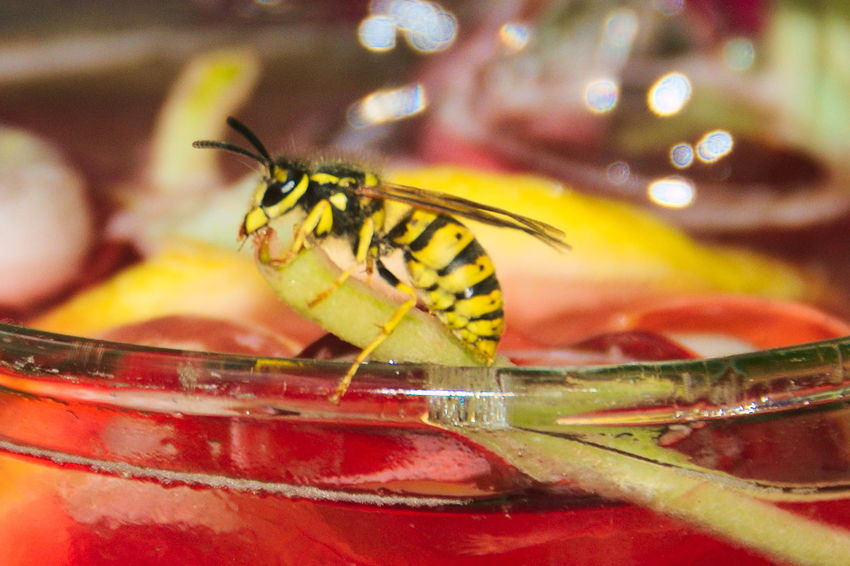Wasp on Glass Animal Animal Themes Animal Wing Animals In The Wild Beauty In Nature Close-up Drink Extreme Close-up Focus On Foreground Glass Insect Lemon Nature No People One Animal Perching Wasp Wasp Macro Wildlife Zoology