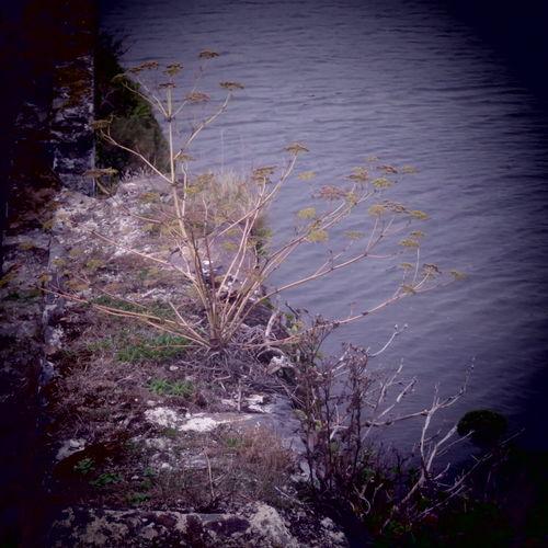 Cliffs The