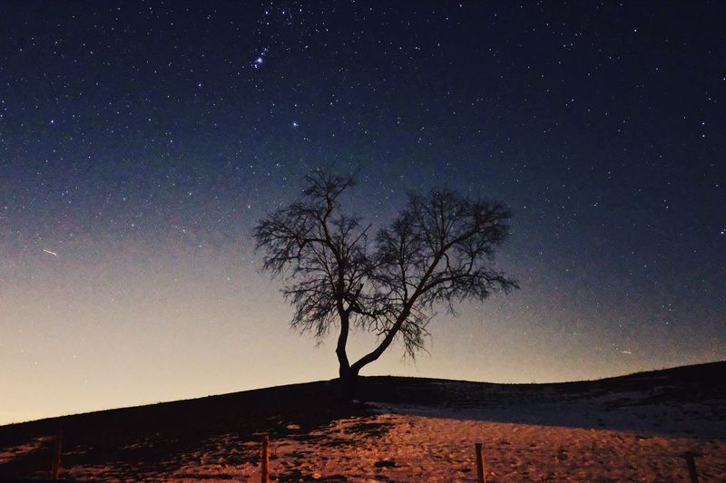 Silhouette bare tree against clear sky at night