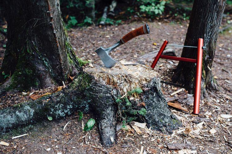 Low angle view of tree stump