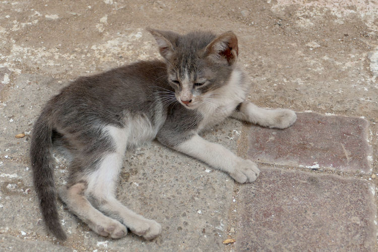 High angle portrait of cat relaxing on concrete