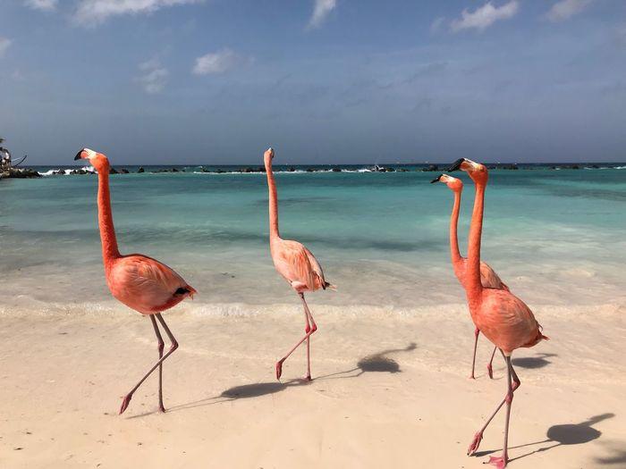 Flamingos Aruba EyeEm Selects Flamingo Bird Animals In The Wild Animal Themes Nature Water
