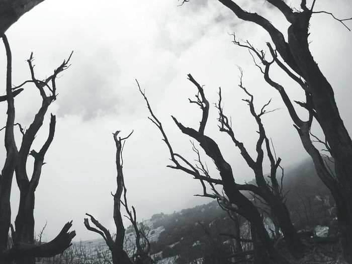 Don't lost y'r mind like this trees Nature Fog B&w Nature Mountain Hiking Exploreindonesia at papandayan