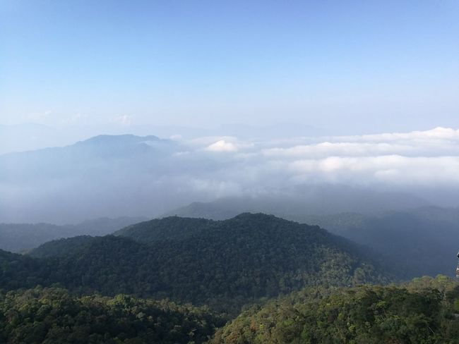 Tree Mountain Forest Fog Beauty Blue Pinaceae Pine Tree Mountain Peak High Angle View Sky Only