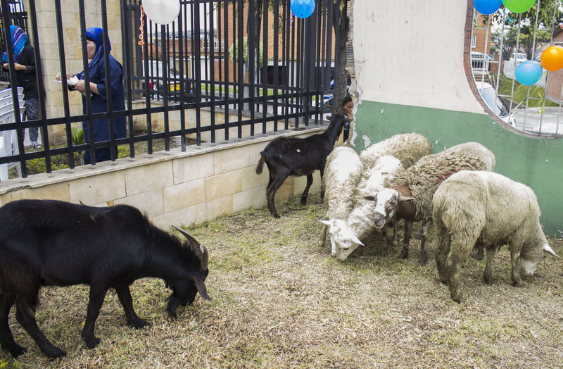 Animal Animal Behavior Animal Themes Day Dog Domestic Animals Domestic Cattle Herbivorous Livestock Mammal Outdoors Pets Standing Togetherness Young Animal Zoology