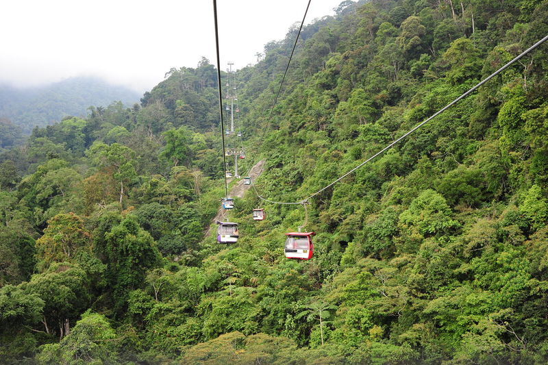 Genting Highland Malaysia Beauty In Nature Cable Cable Car Day Foliage Forest Green Color Growth High Angle View Land Land Vehicle Lush Foliage Mode Of Transportation Mountain Nature No People Outdoors Overhead Cable Car Plant Scenics - Nature Skyway Transportation Tree