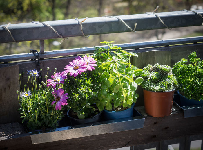 Close-up of potted plants