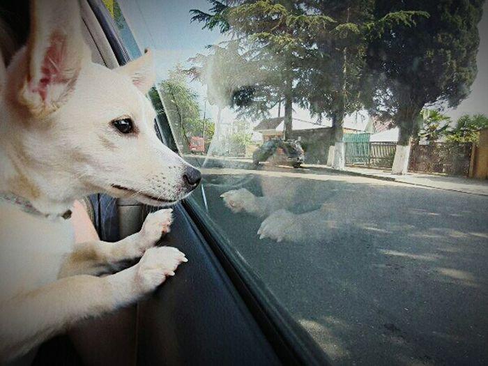 Maxi💖 Dog First Eyeem Photo