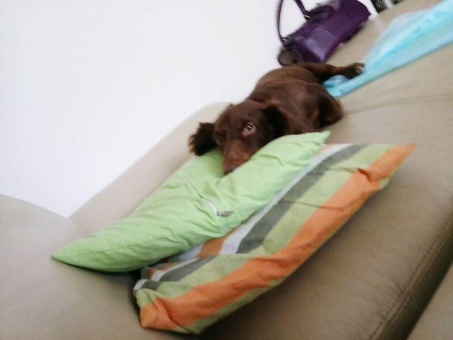 Dachshund Doggie I Love My Dog Doglover Dog❤ Dog Love Cute PetsDog Dog Lover My Puppy Dachshundlovers Pet Dachshundlove Sausagedog