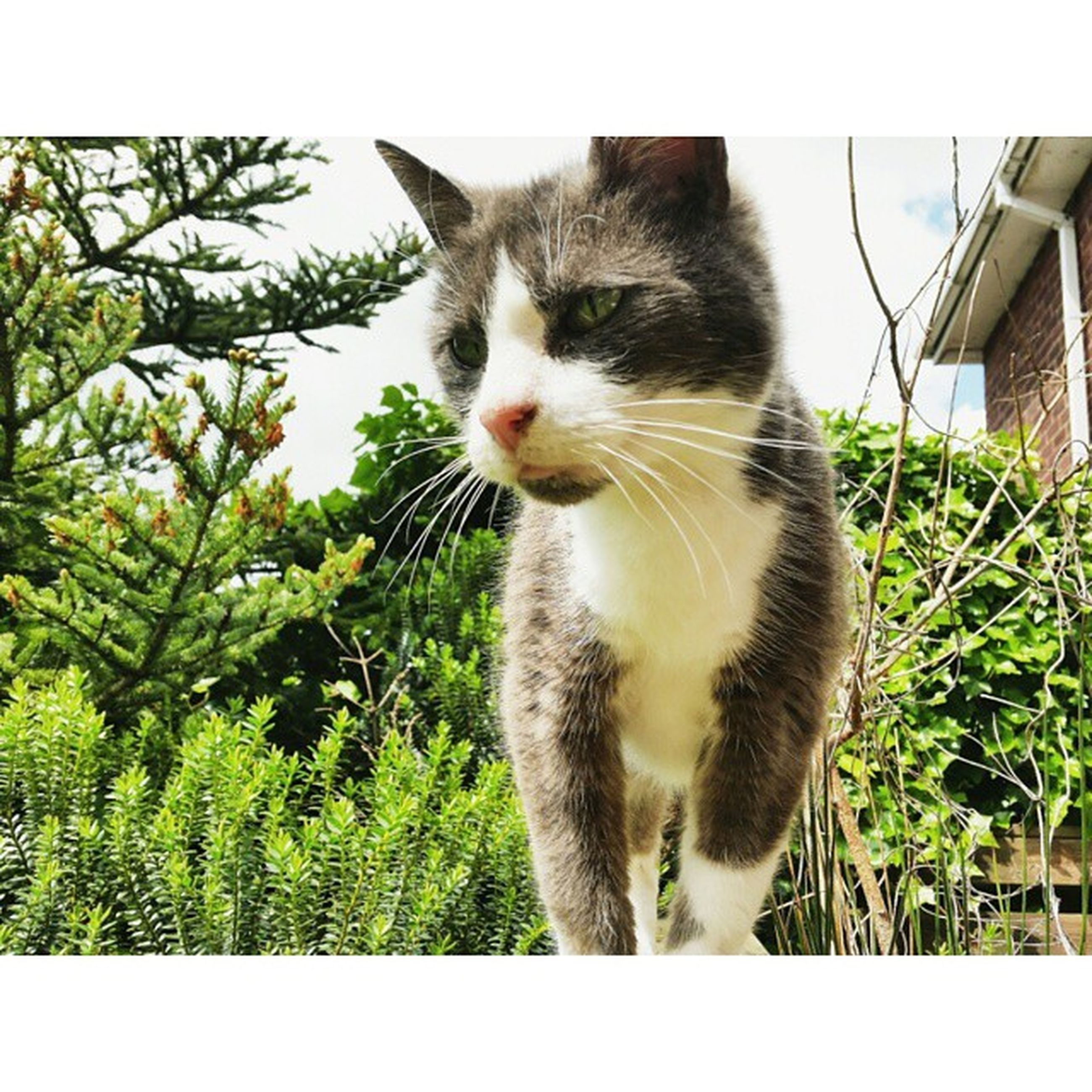animal themes, one animal, mammal, domestic cat, cat, domestic animals, pets, feline, sitting, whisker, looking away, low angle view, transfer print, alertness, zoology, portrait, outdoors, vertebrate, full length, animal
